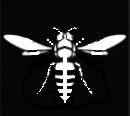 White-Hornet
